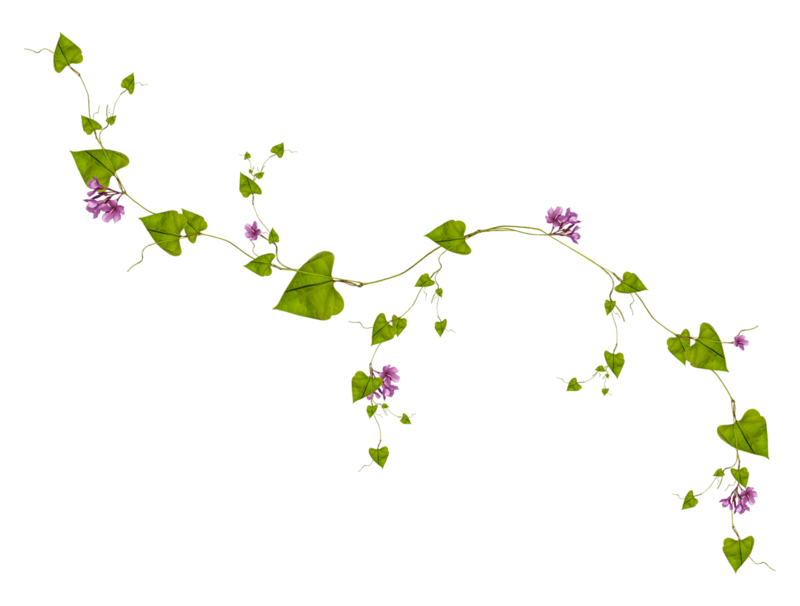Fleur Grimpante Dessin Depu Vi