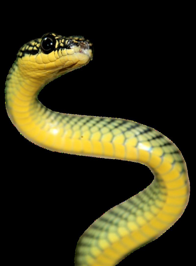 Image 10 : Serpent