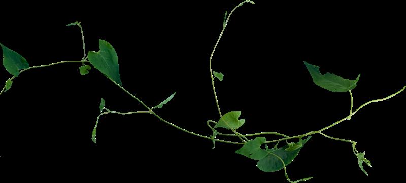 Tubes arbres et plantes page 2 for Plante 7 feuilles