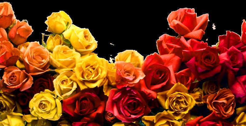 rose-jaune-1.png