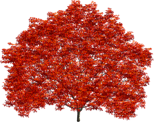 tube-arbre-orange.png