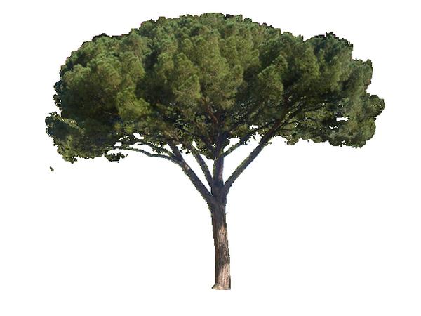 tube-arbre3.png